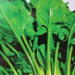 Кресс-салат (зелень)