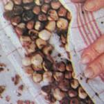 Очистка лесных орехов